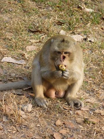 Stan Feld-Cambodian Monkey